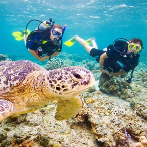 discover_stoke_divers